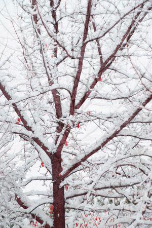 Winter-Oak