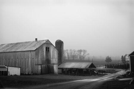 Amish Farm #39