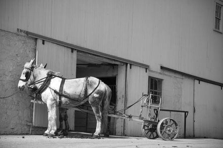 Amish Ride #68