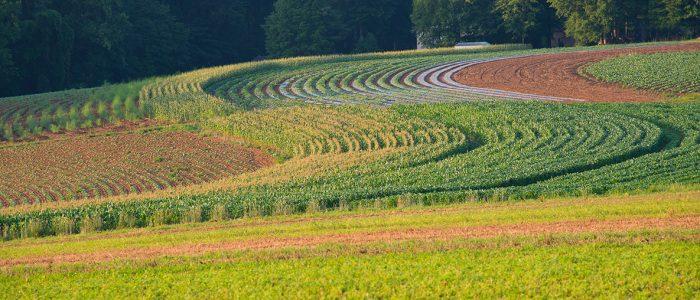 rural-scape-c-Crop-Maze