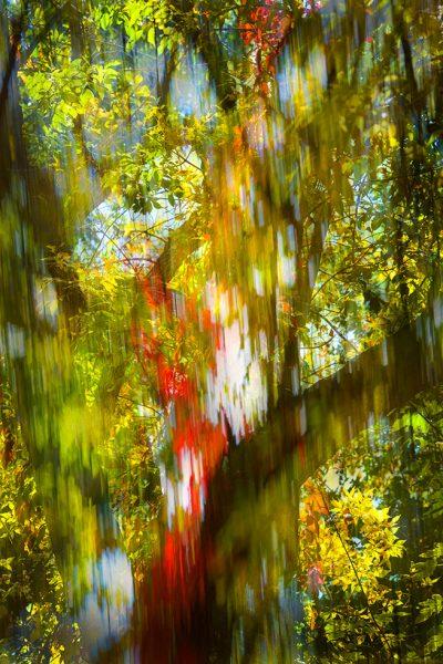 trees-Fall-Ash-78